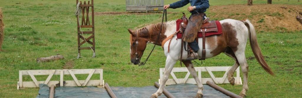 cropped-entrainement-cheval-ranch-tashunka.jpg