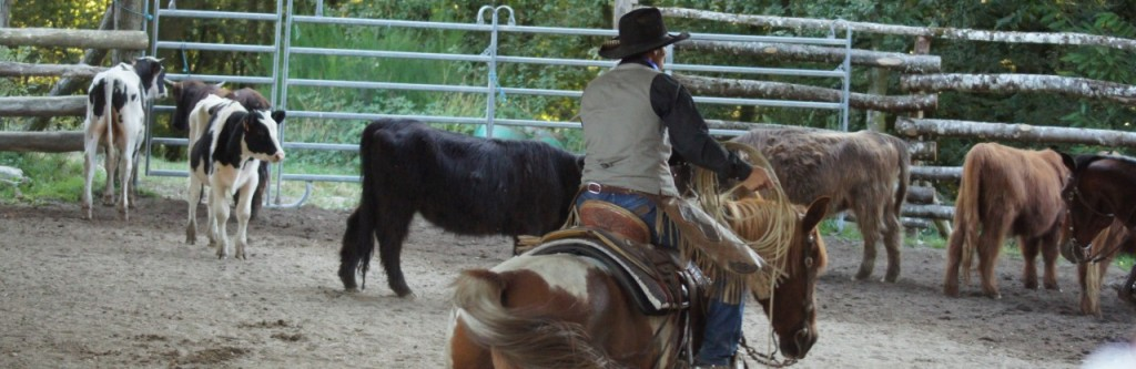 cropped-entrainement-troupeau-ranch-tashunka1.jpg